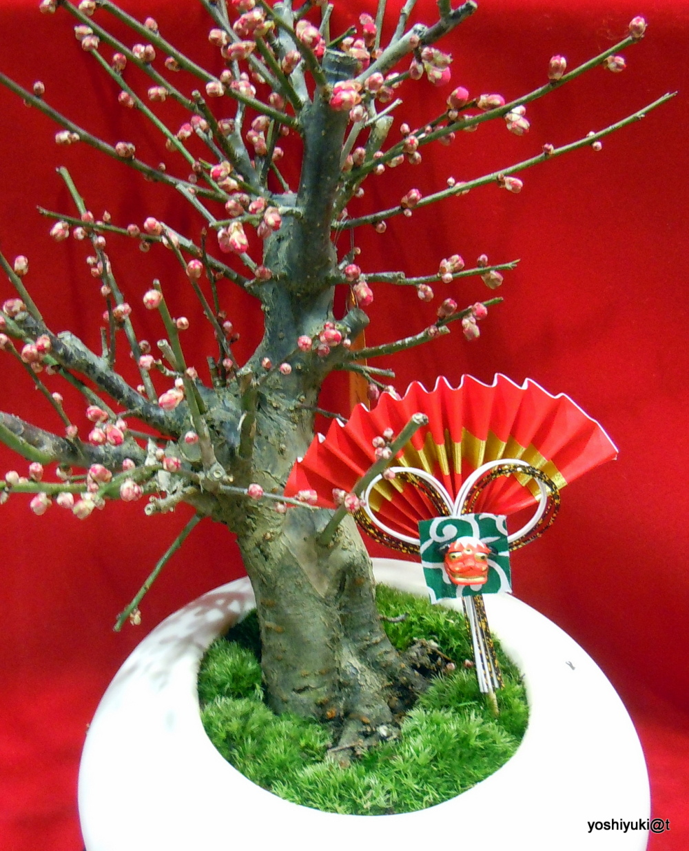Bonsai - Japanese apricot tree in a pot