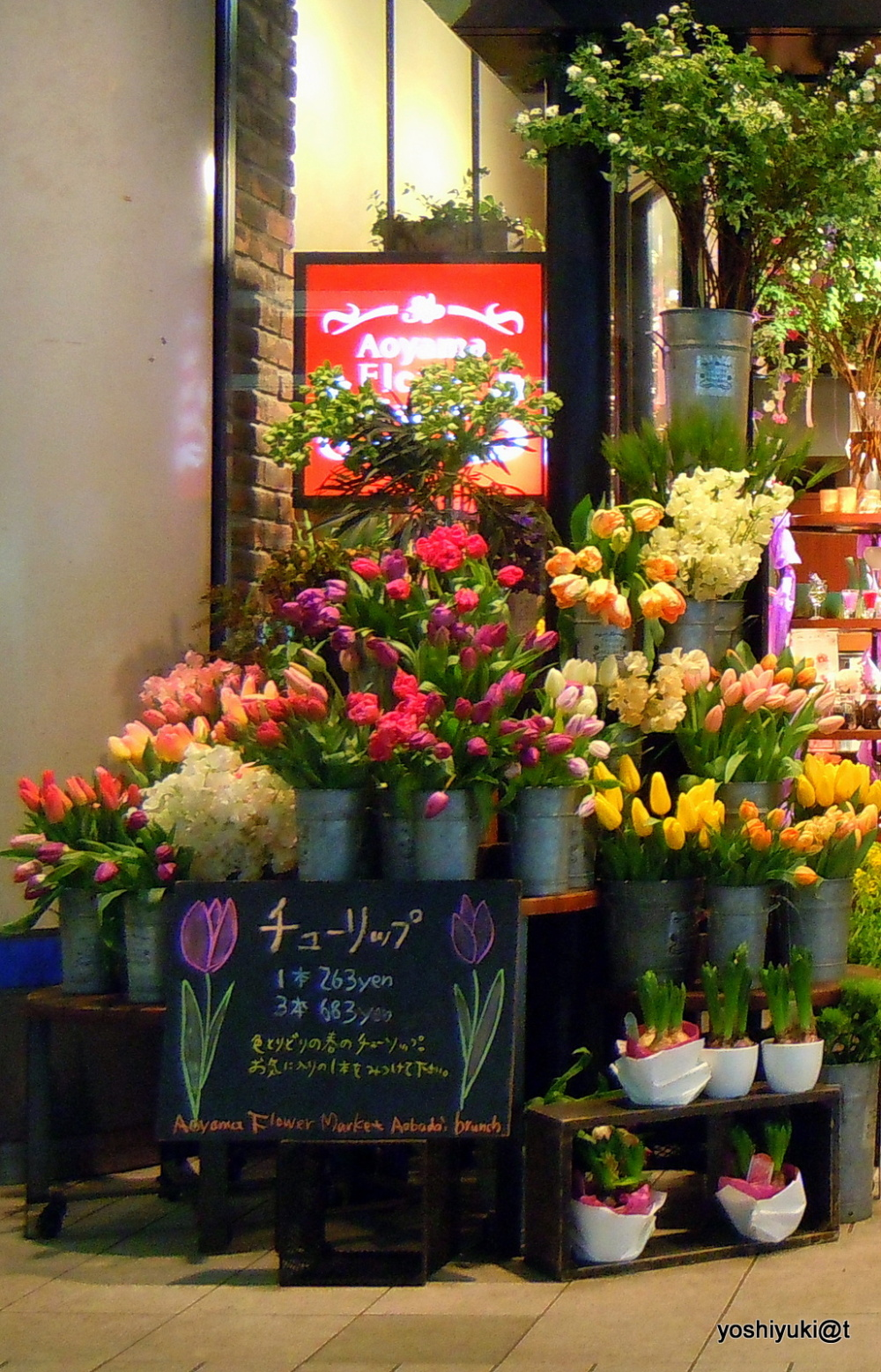 All about tulips at the florist's