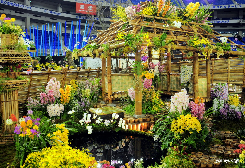 Bamboo and orchids in a hotspring setting