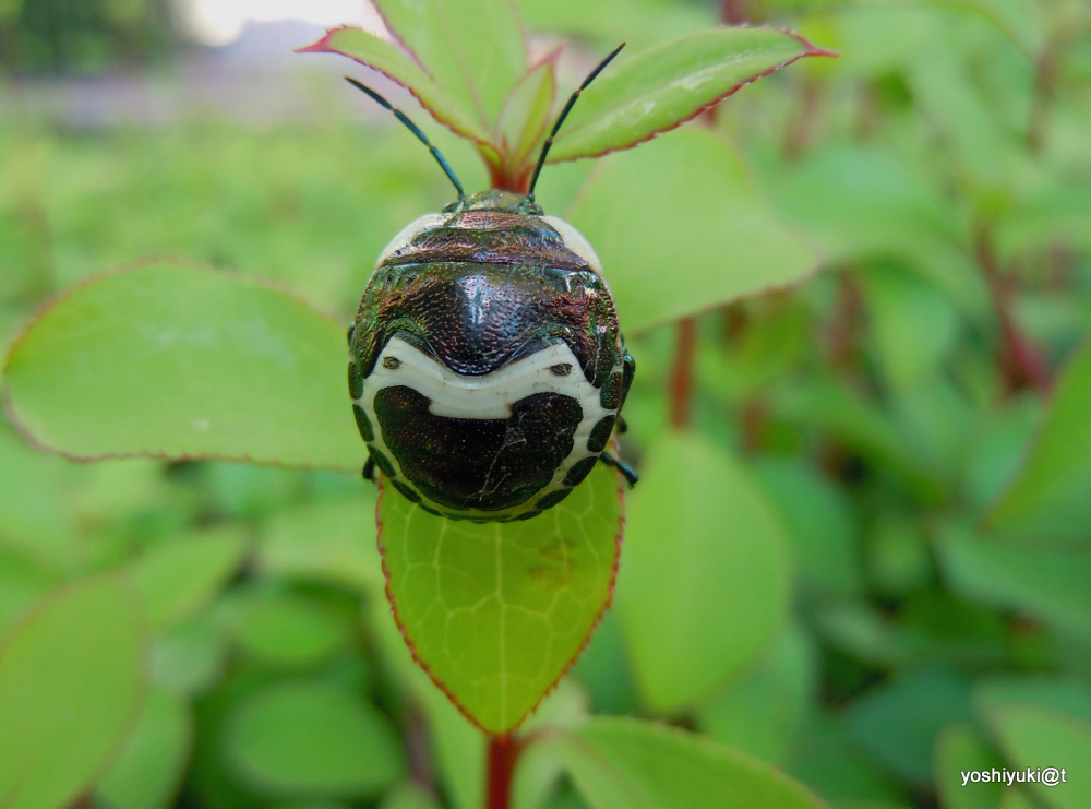 Bug wearing a mask