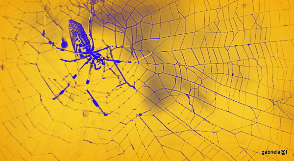 Spider in a golden web (digially enhanced)