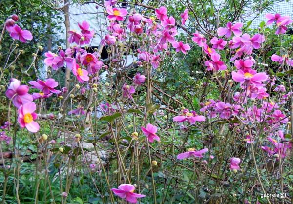 Community garden in autumn
