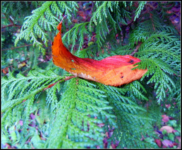 The leaf had a soft landing