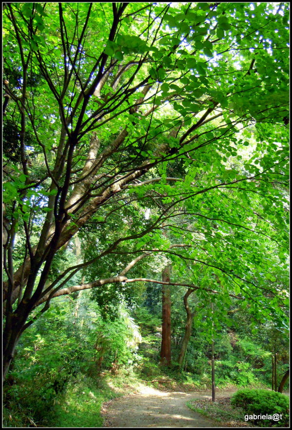 Walking under the green canopy of Spring