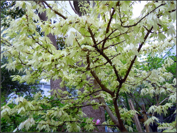 The amazing beauty of trees (4)