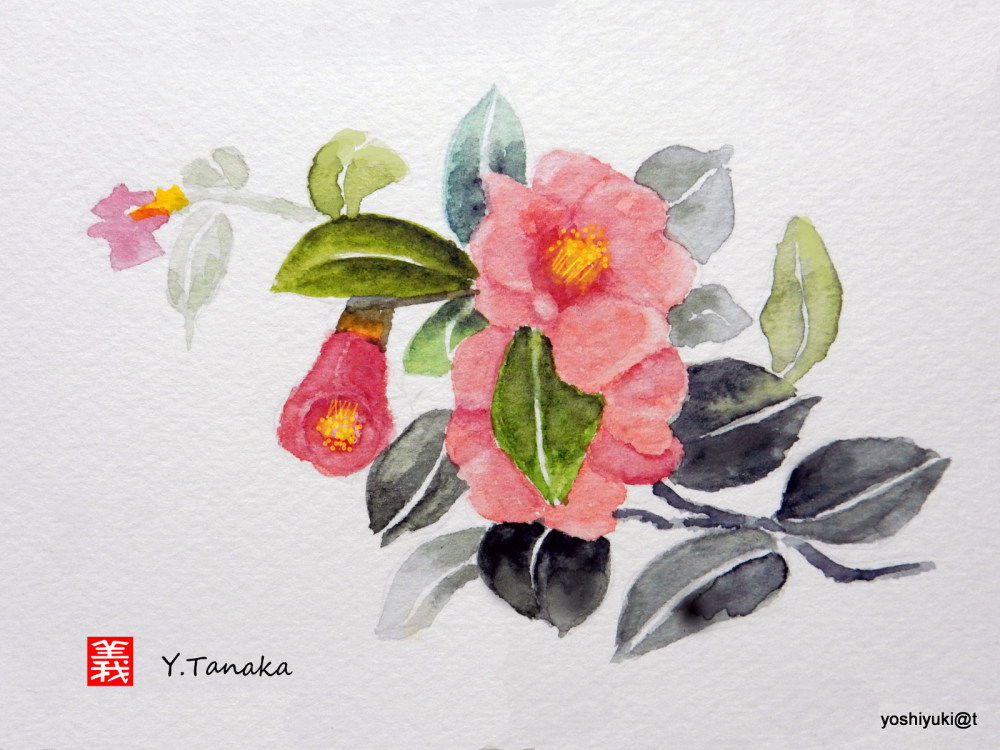 Watercolour of Camellia Japonica