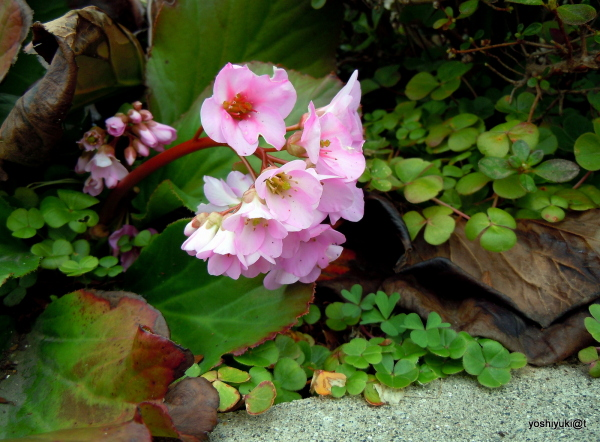In Grandpa's garden flowers come and go...