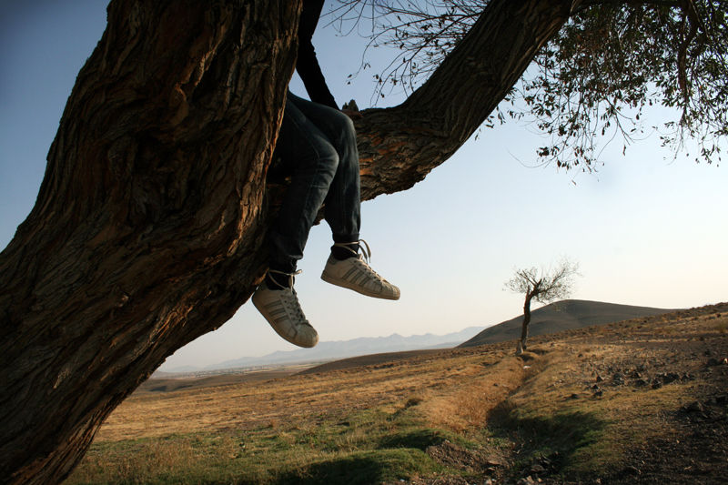 feet,sky,tree,jump,fly