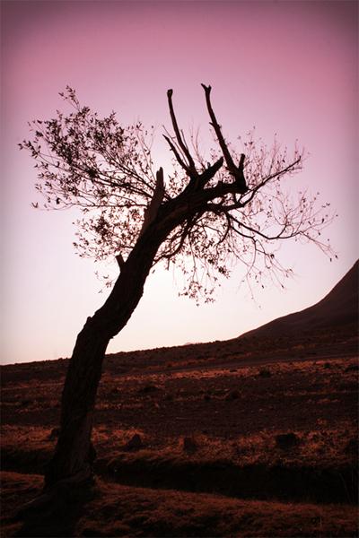 tree,alone,silent