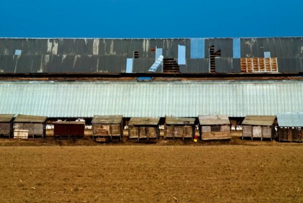 dairy farm barn western merced county