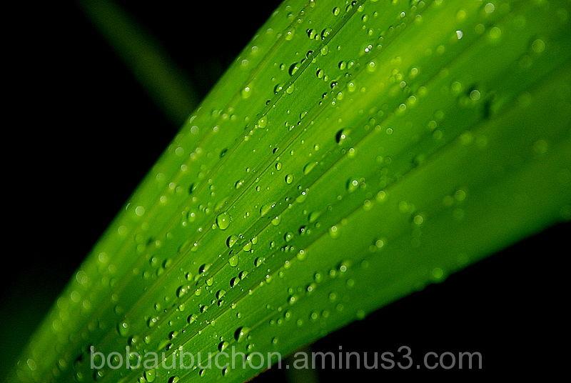Botanical Winter