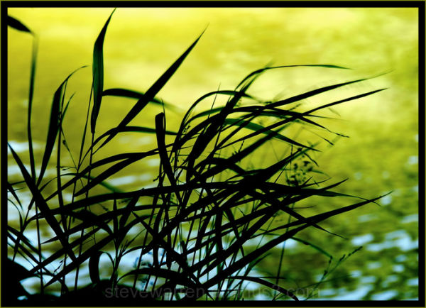 Shoreline Silhouette Vll
