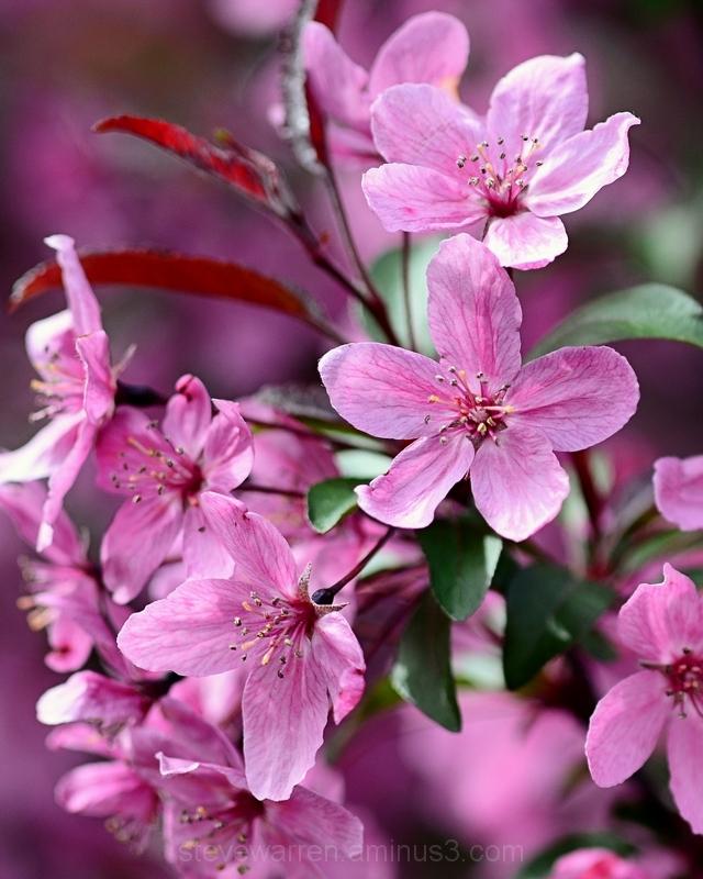 Pink...all around