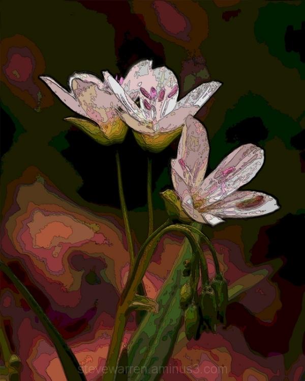 Little yard Flowers 3