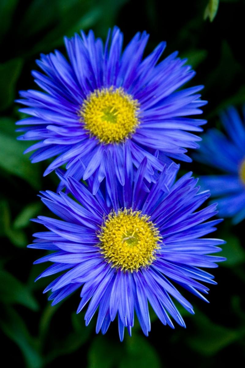 Blue Like That