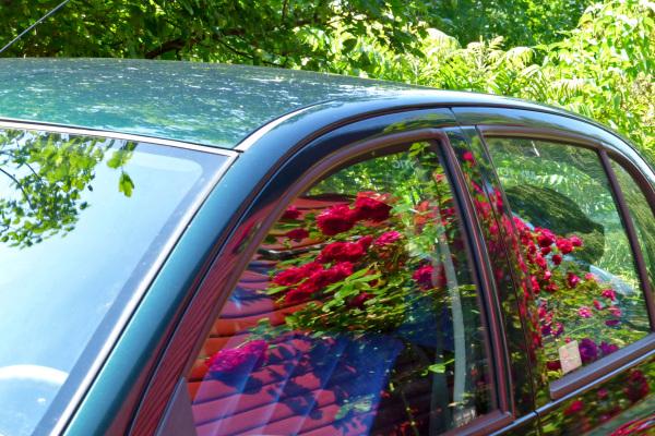 A flowery Toyota.