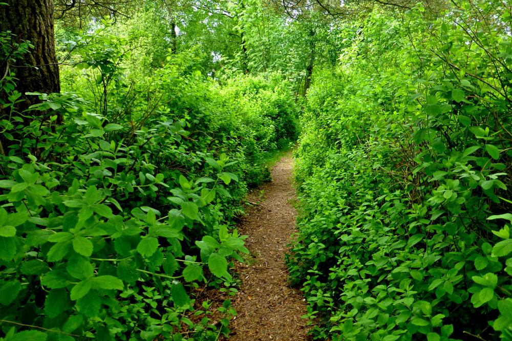 The narrow path.