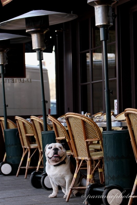 Une Vraie Vie de Chien Parisien