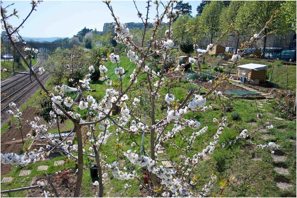 Les petits jardins ouvriers