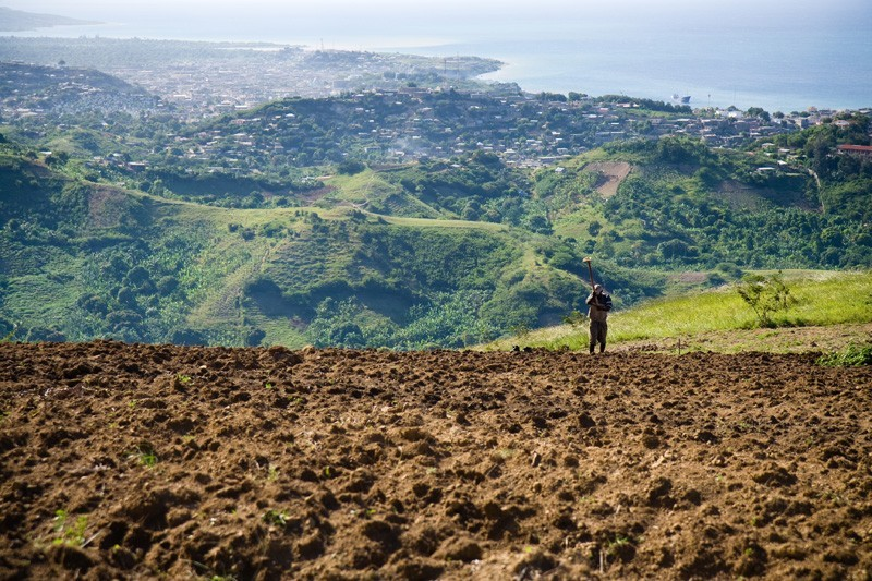 haiti man in field