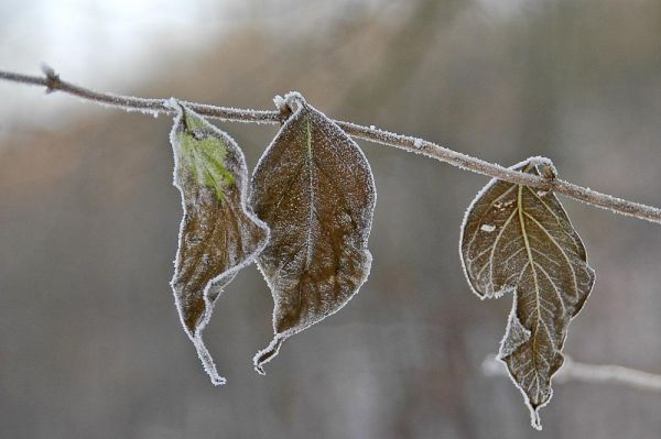 Leaves in Winter
