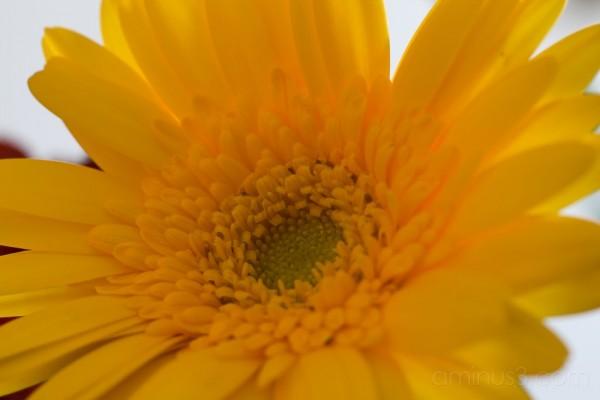 Yellow -- 1 of 2