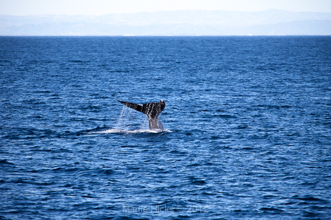 Whale Watching III