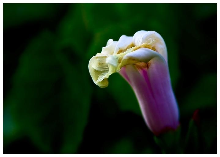 unkown flower