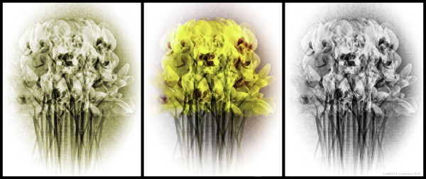 orchid triptych