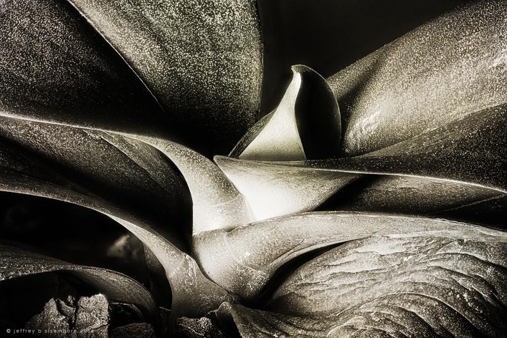 nature's sculpture II