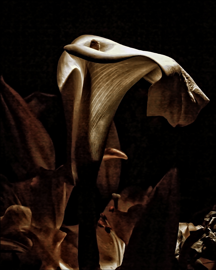 wilting lily