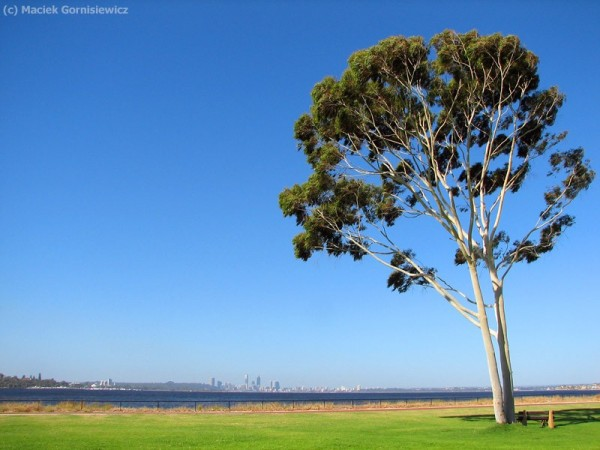 View towards Perth Skyline from Applecross.