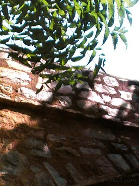 Neem Leaves brushing against the tomb (Image 11)