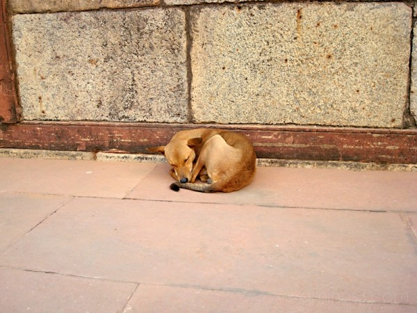 stray dog (Image 36)