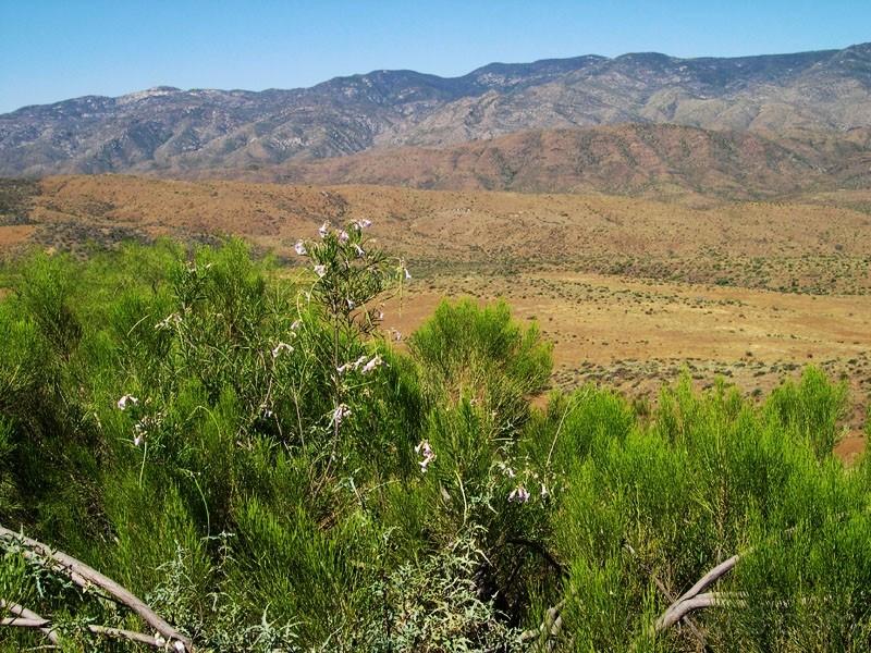 Arizona 3 (2005)