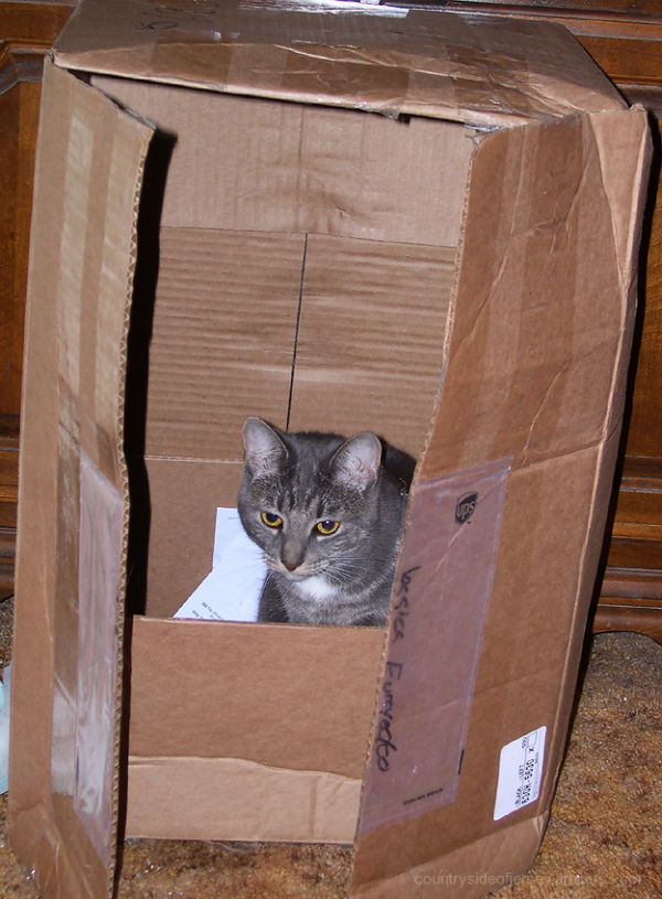 Silly Tuesday - Ella... Ready to be Shipped