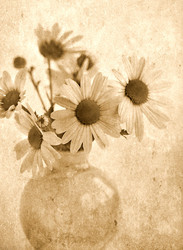 Mums in Vase  Sepia