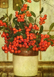 Pyracantha