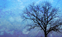 Winter Tree with Textures
