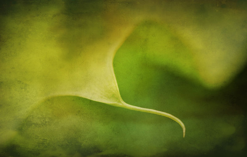 Curving Leaf