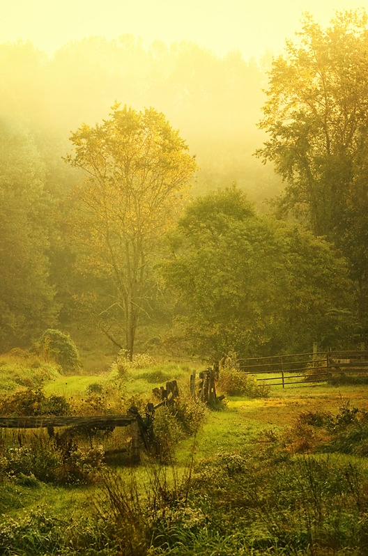 morning mist & sun
