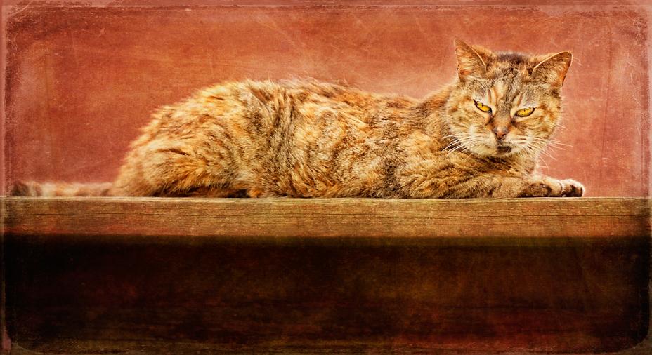 Charlotte cat
