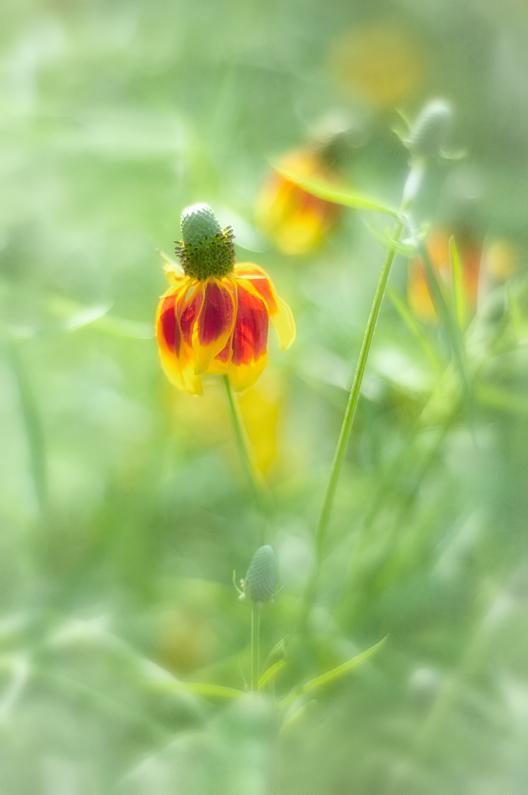 Orange & Yellow Flower