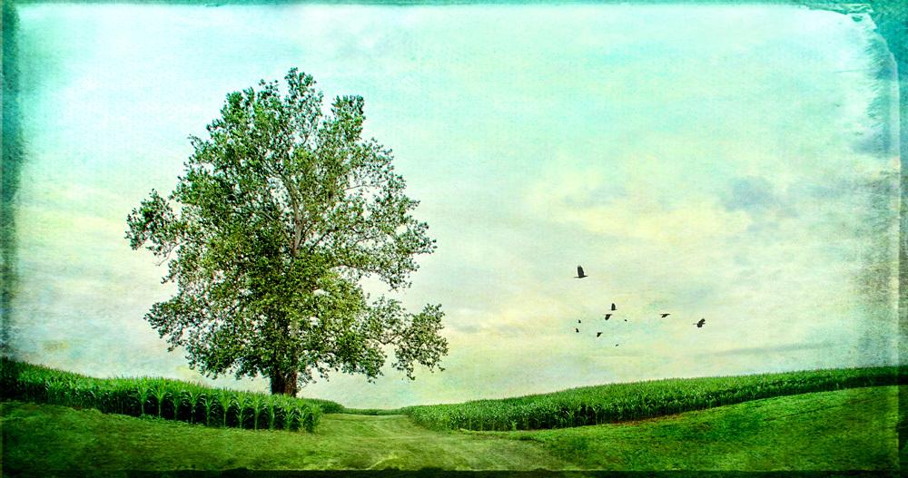 Corn Field with Tree 2