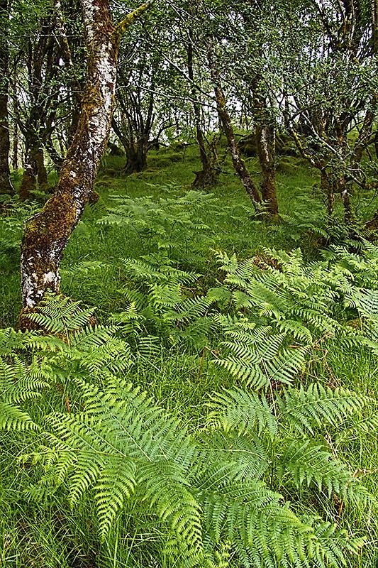 Ferns & Trees Scotland