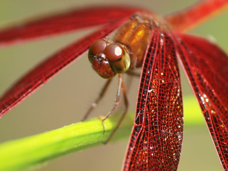Dragonfly (2)