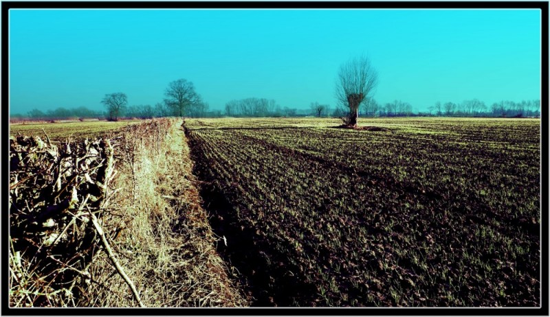Maasheggen Landscape