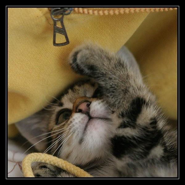 Jeu de chaton