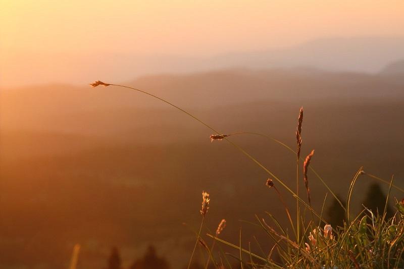 D'herbe et de lumière
