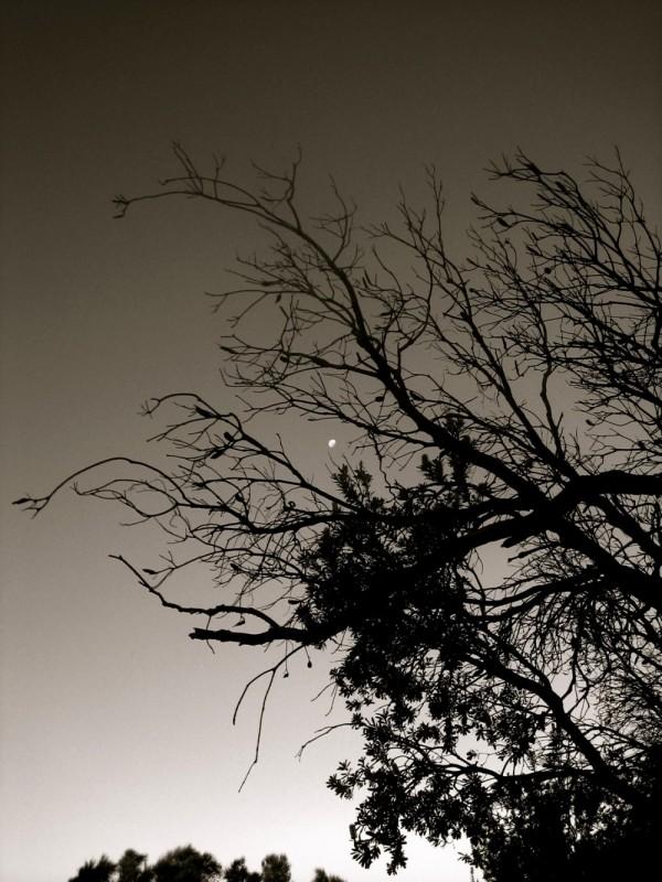 Banksia, Turrimetta Head